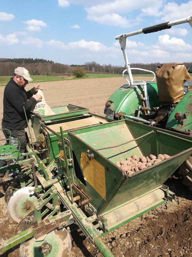Die Geschichte der Kartoffel auf Hof Holberg