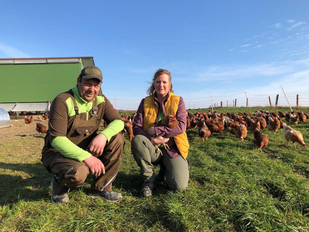 Frische Eier von den Hühnern auf Hof Holberg